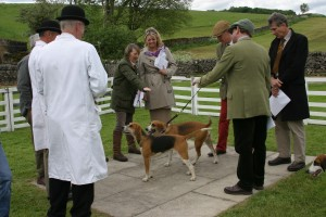 Judging the High Peak Harriers