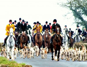 The Beaufort and the Berkeley Hounds move off from their annual joint meet.