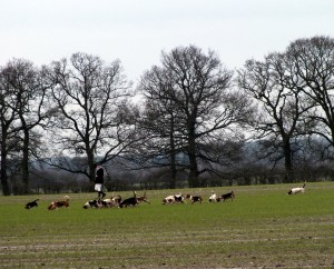 The East Lincs Bassets at Work.