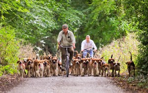 Laois Foxhounds out hound exercising on bicycles