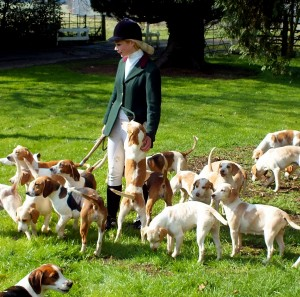 Master of RAC and her Beagles at an invitation meet at Hackthorn in Lincolnshire