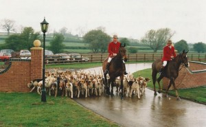 Hounds arriving at the new kennels for the first time.