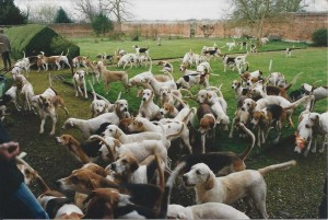The Puckeridge Hounds waiting to go in to the bedroom.