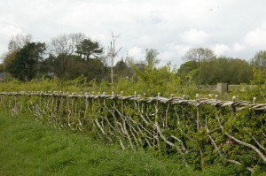 The binding of a laid hedge is very important