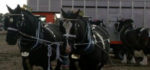Shires ready for action.