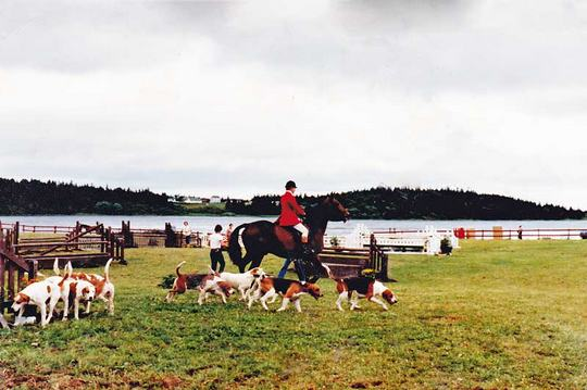 Hounds parading at the Westphal Horse show