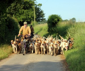 Oli and the Essex and Suffolk hounds out exercising on bikes.
