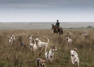 The Royal Artillery Hounds with their Huntsman, Robert Moffat.