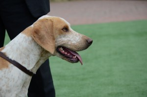 Champion Dog Hound, Findon Barman