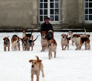 French hounds in snow
