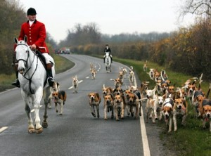 Long serving Warwickshire Huntman William Deakin and hounds on a visit to the Brocklesby Country