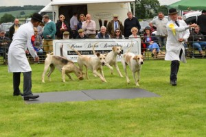 Grove and Rufford and Albrighton and Woodland run off for the Couple of Entered Dog Hounds