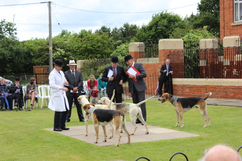 Judging the Grove and Rufford Young Hounds