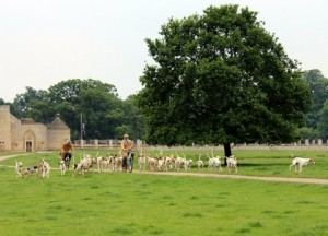 The Fitzwilliam Hounds leaving the Kennels