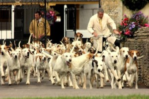 Duke of Beaufort's Hounds leave for Hound Exercise with Huntsman Tony Holdsworth.