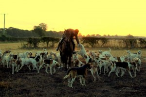 Adam Esom with his hounds