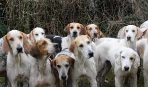 South Pembrokeshire Hounds