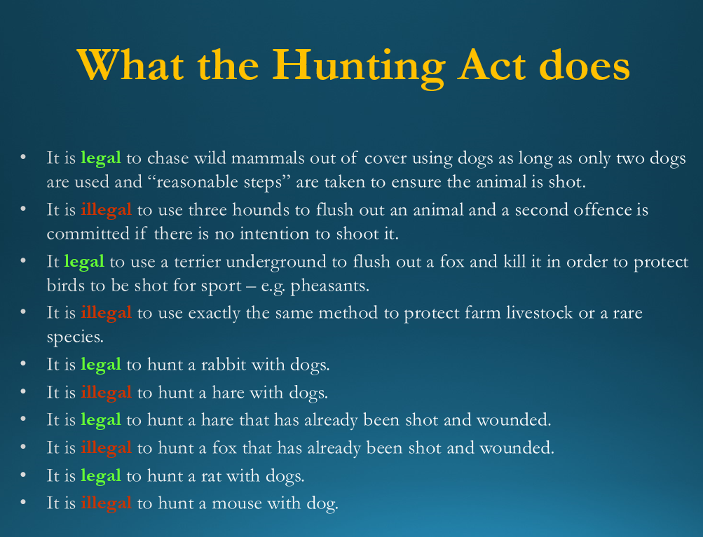What the Hunting Act does